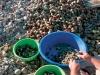 amasrada-deniz-mahsulleri-istiridye-temizlik