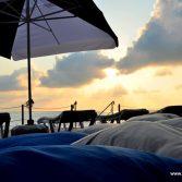 inkumu-terrace.jpg